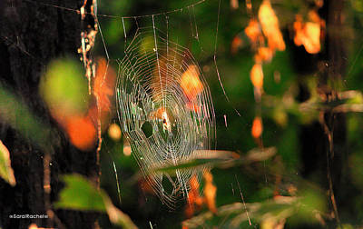 Autumn Web Art Print by Sarai Rachel