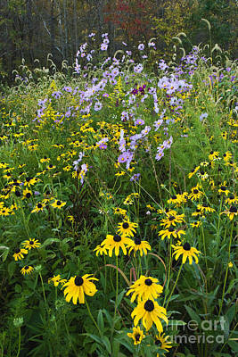 Indiana Landscapes Photograph - Autumn Wildflowers - D007762 by Daniel Dempster