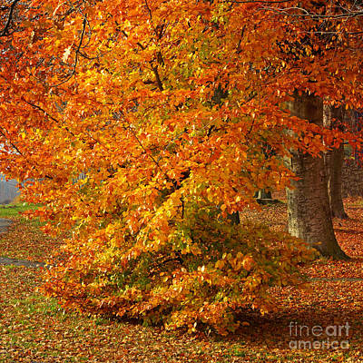 Photograph - Autumn Wonder by Lutz Baar