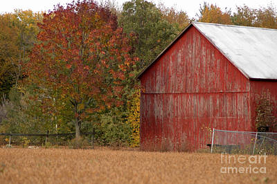 Autumnal Barn Art Print by Ginger Harris