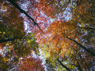 Autumnal Canopy Art Print by Rob Amend
