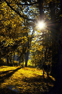 Autumnal Morning Art Print by Bill Cannon