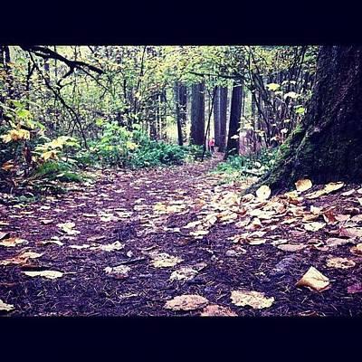 Woodland Wall Art - Photograph - #autumnleaves #autumntrees #autumn by Karen Clarke