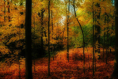 Photograph - Autumn's Allure by Anthony Rego