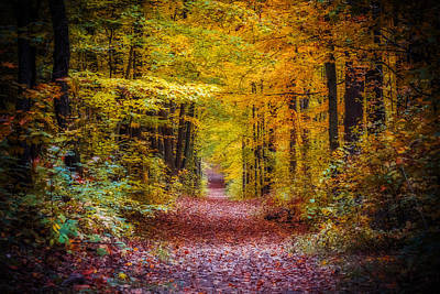 Photograph - Autumns Canopy by Anthony Rego