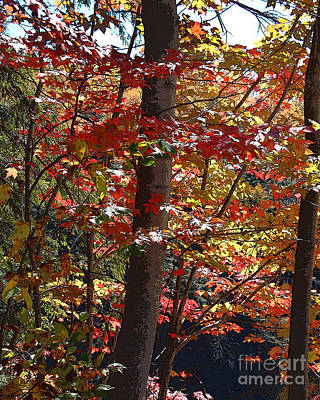 Adirondack Drawing - Autumn's Delight by Diane E Berry