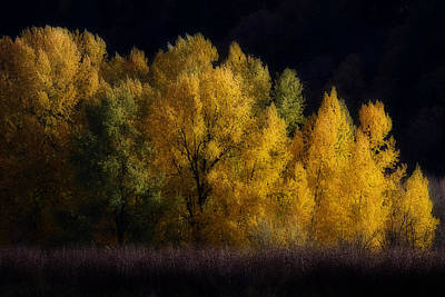 Photograph - Autumn's Last Hurrah by Wes and Dotty Weber