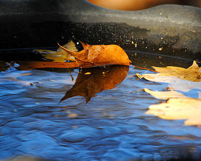 Photograph - Autumn's Reflection by Jai Johnson