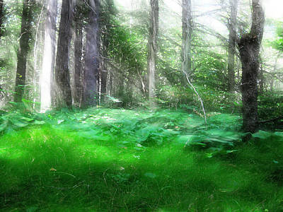 Art Print featuring the photograph Avalon Forest Dreamscape by Mario Carini