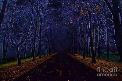 Avenue Of Trees Art Print by Michal Boubin