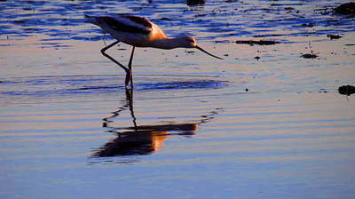 Avocet In The Dim Light Art Print by Catherine Natalia  Roche