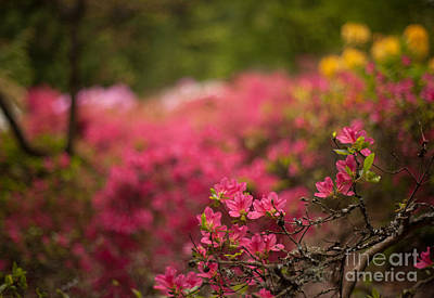 Rhodie Photograph - Awaiting by Mike Reid