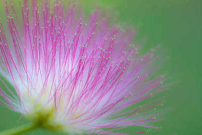 Photograph - Awesome Blossom by Dorothy Cunningham