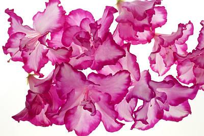 Azalea Abstract Art Print by Brad Rickerby