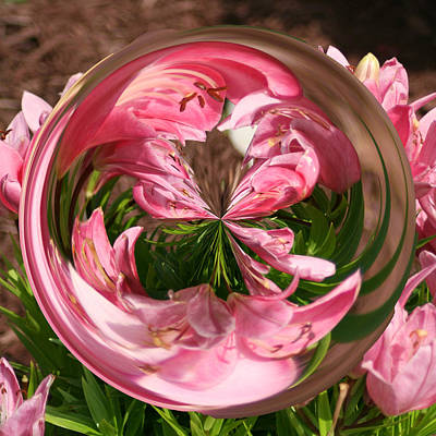 Photograph - Azalea Orb by Bill Barber