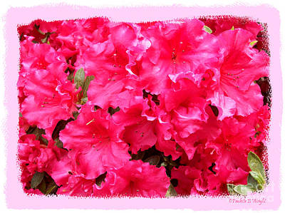 Photograph - Azalea Poppers by Paulette B Wright