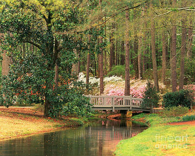 Azaleas And Footbridge Print by Michael Hubrich and Photo Researchers