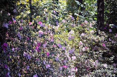 Photograph - Azaleas In The Forest by Maria Urso