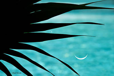 Photograph - Azure Palm by Michelle Wiarda-Constantine