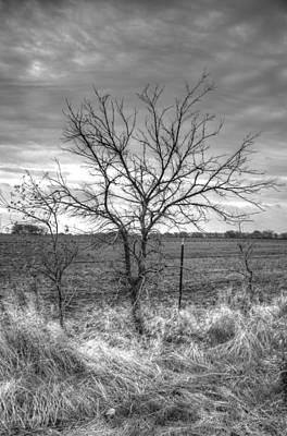 B/w Tree In The Country Art Print by Peter Ciro