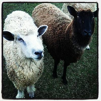 Sheep Photograph - Baaaaa by Brooke Cain