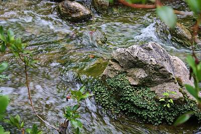 Photograph - Babbiing Brook by Bruce Bley