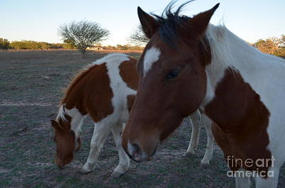Photograph - Baby And Mom by Donna Brown