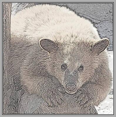 Photograph - Baby Bear by Kathy Sampson