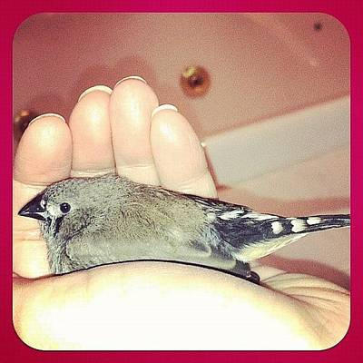 Finch Photograph - #baby #bird #finch My #hand #love by Lori Lynn Gager