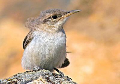 Photograph - Baby Bird by Jean Noren