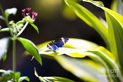 Leda Photograph - Baby Blue by Leslie Leda