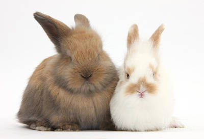 Photograph - Baby Bunnies by Mark Taylor