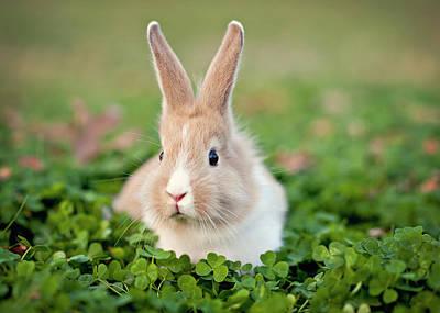 Baby Bunny In Clover Field Art Print