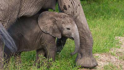 Photograph - Baby Elephant Well Protected by Mareko Marciniak