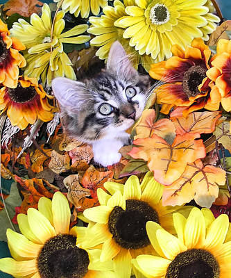 Baby Kitty Cat Munching Fall Leaves - Cute Kitten In Autumn Colors With Sunflowers - Fall Time Art Print by Chantal PhotoPix