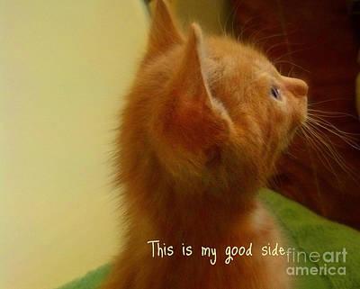 Baby Kitty Print by Garnett  Jaeger