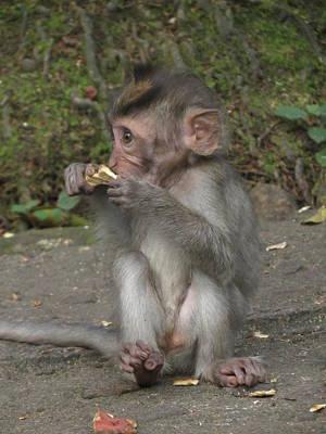 Baby Monkey Original