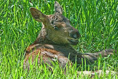 Baby Moose Art Print