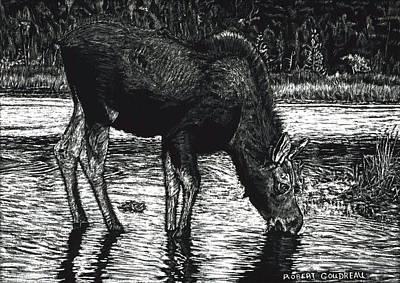 Baby Moose Grazing Art Print