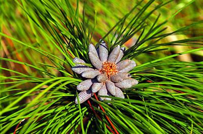 Baby Pine Cones Art Print by David Lee Thompson