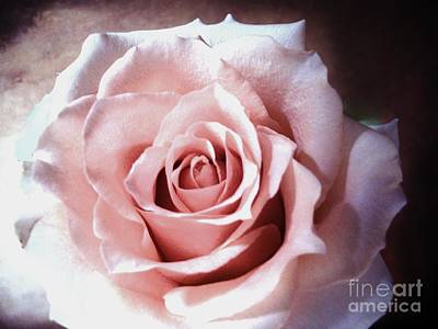 Histogram Photograph - Baby Pink Rose by Marsha Heiken