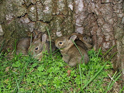 Baby Rabbits Art Print