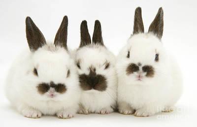Photograph - Baby Rabbits by Jane Burton