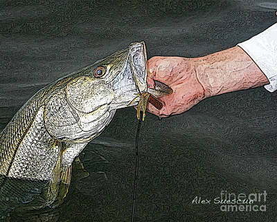 Back Bay Snook Print by Alex Suescun