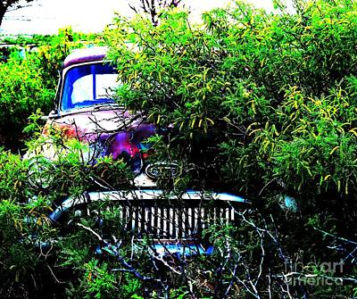 Photograph - Back To Nature Prep by Robert D McBain