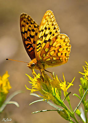 Photograph - Backcountry Butterfly Le by Greg Norrell