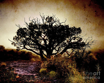 Flagstaff Photograph - Backlight Iv by Arne Hansen