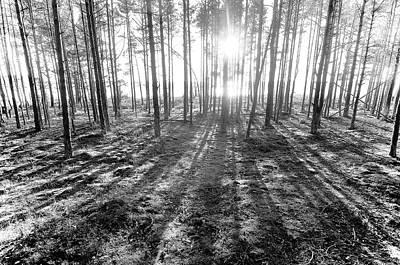 Backlight Art Print by Micael  Carlsson