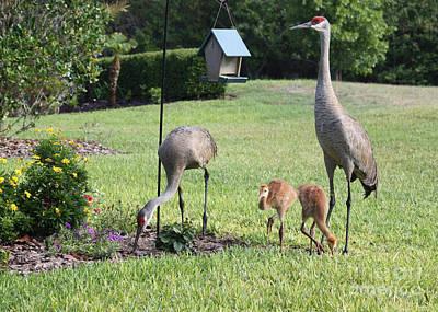 Backyard Birds Art Print