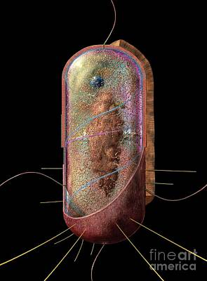 Biological Digital Art - Bacterial Cell Generalised by Russell Kightley